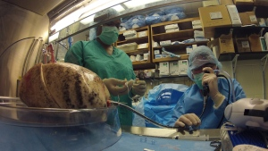 In this recent photo, research associate Lolita Forrest assists Dr. Thomas Egan in testing a set of lungs donated as part of research at the University of North Carolina in Chapel Hill. (AP / Allen G. Breed)