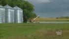 CTV Regina:  Crop insurance changes