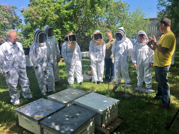 Beginner beekeepers learn about bees at the Annual Beginner Beekeeper's Course at St. Joseph's Honey on May 29, 2016. (Jessie Anton / CTV Regina)