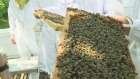 Beekeeping abuzz in Sask.