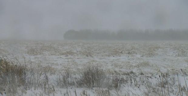 Snow harvest crop