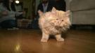 Blind kitten beating the odds