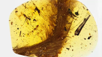 Dinosaur tail found preserved in amber