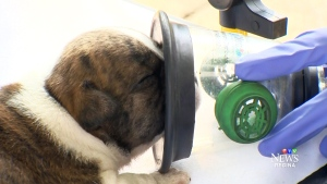 Firefighters get pet-friendly oxygen masks