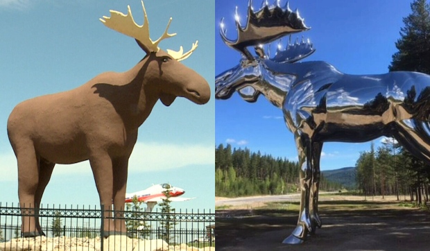 Moose face-off