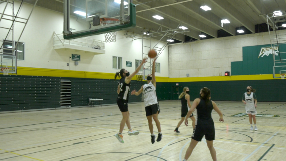 university of regina cougars basketball